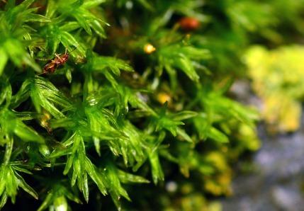 Photo Macro : mousse + insecte