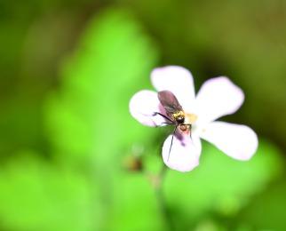 Photo Macro : insecte mellifère