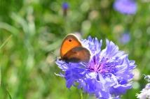 Superbe papillon orange !